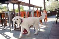 Pooch Friendly Patios in Chandler  Chandler Lifestyle
