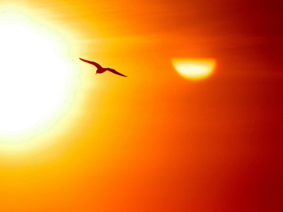bird_sun2