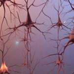 STRESS Personality development theories