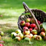 Ripe apples in the basket