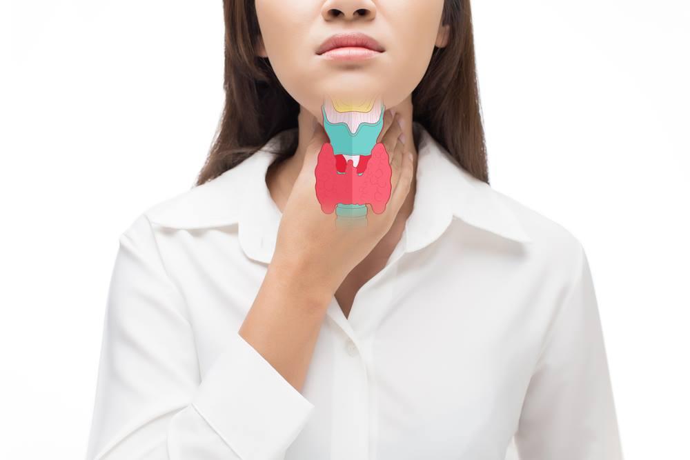 thyroid gand model
