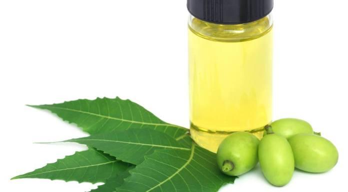 नीम के तेल के फायदे नीम का तेल बनाने की विधि