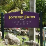Loterie Farm In St. Maarten: My Hike In Tropical Rains