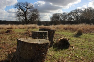 Perspective of front log slightly skewed.