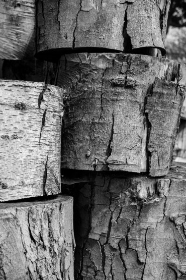 There was a touch of the rule of thirds about this, along with varying vanishing points. I liked the array of textures, and how the light and shade played on the peeling bark.