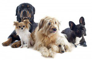 different breeds of dogs pose together