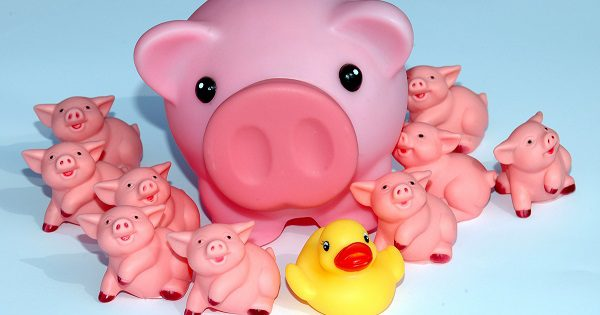 rubber pigs and a duck