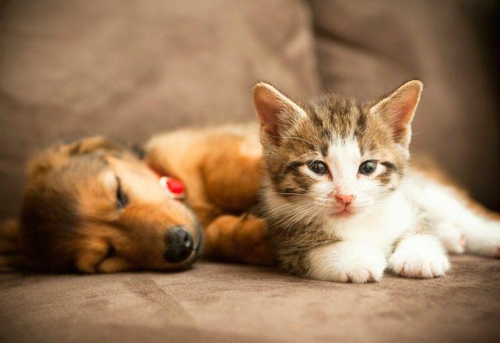 puppy and kitten.jpg