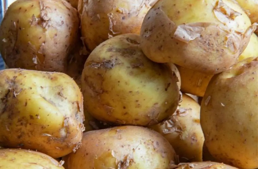 Thanksgiving Potato Extraordinaire -La Bonnotte