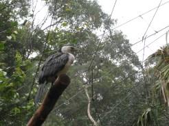 A regal bird?