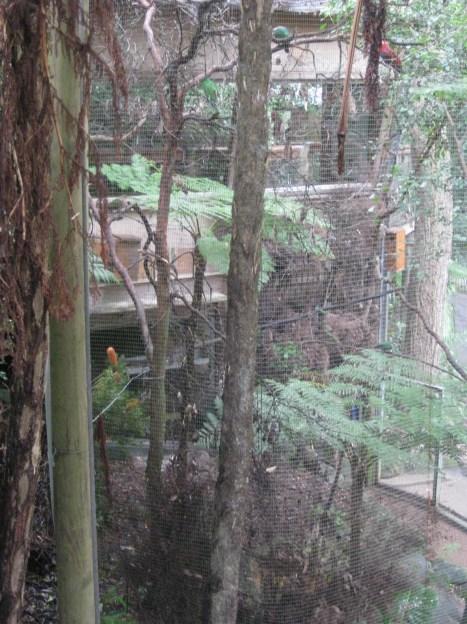 Parrot enclosure