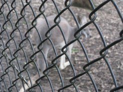 """My """"arty"""" shot - which is code for the camera focusing on the fence rather than the true subject of the shot!"""