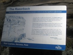 Info on the razorback