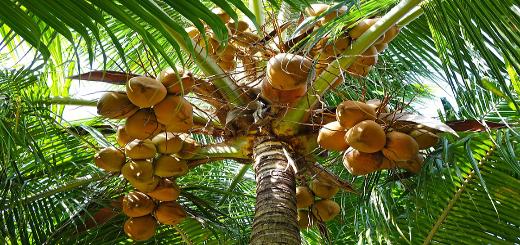 Virgin Coconut Oil – Like Mother's Milk – Life Vibrant