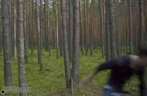 ПриведениЯ в лесу :))
