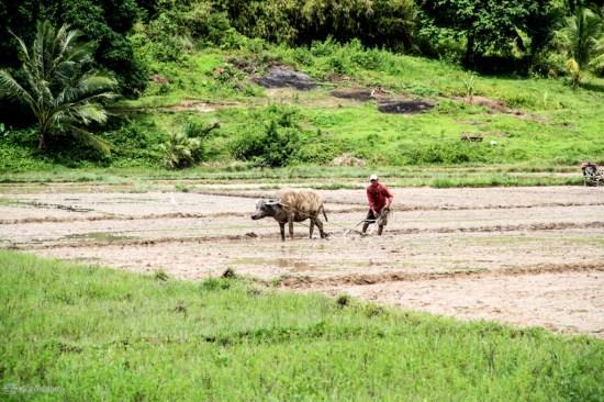 Филиппинский крестьянин