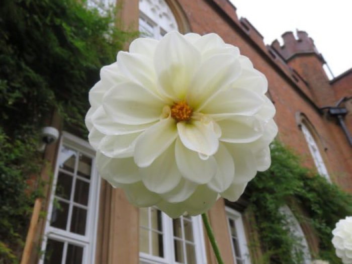 cumberland-lodge-flower