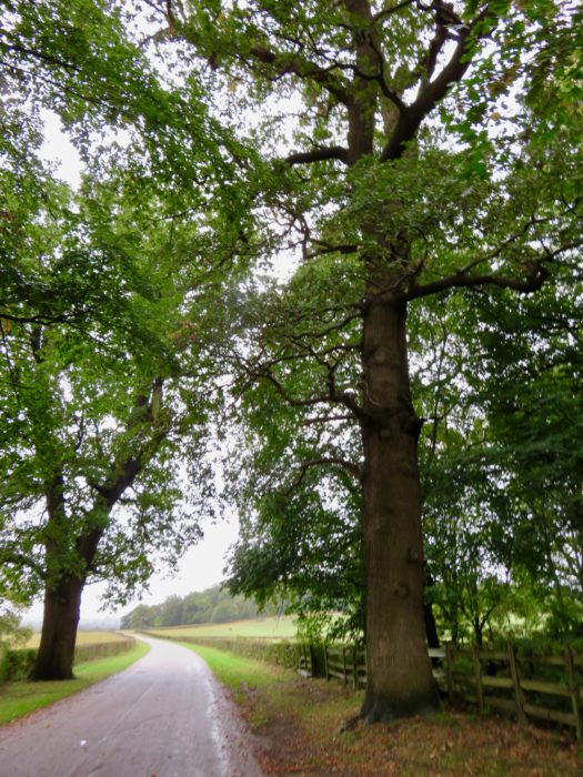 windsor great park pathway