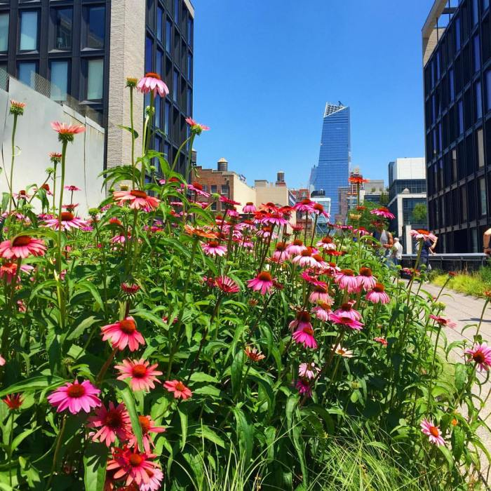 chelsea nyc high line