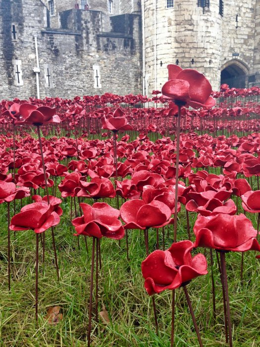 tower-of-london-poppies-from-ground
