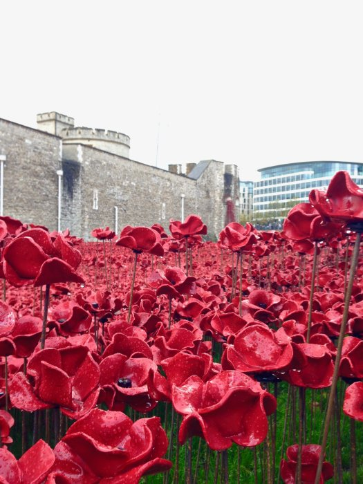 tower-of-lonfon-poppies-from-ground