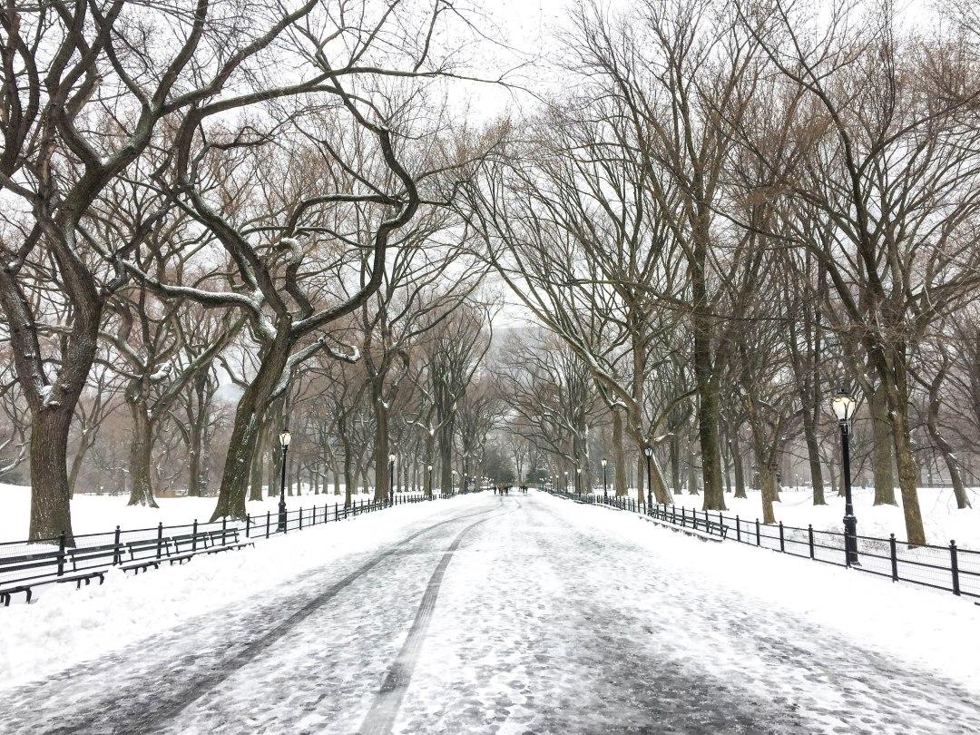 storm stella snow central park