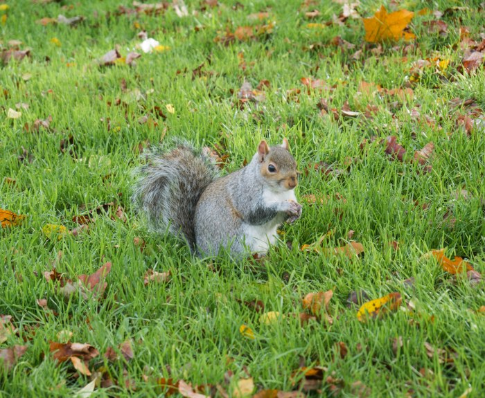 squirrels of london