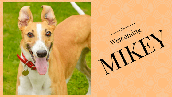 Welcoming Mikey