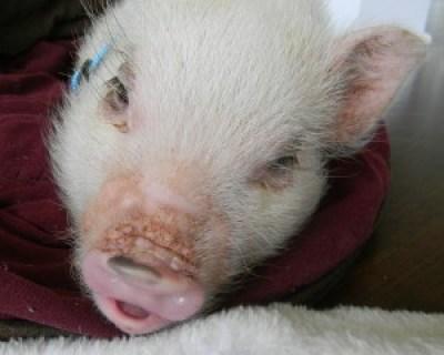 Sleepy Oscar with his bottom lip stuck out.