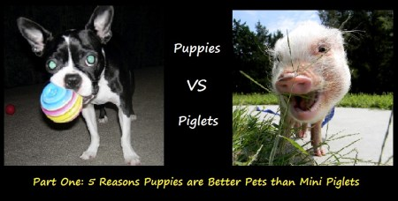Puppies vs piglets 1