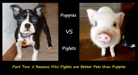 Puppies vs piglets 2