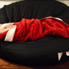 Mini Bean Bag Chair Directors Walmart Pig Oscar Loves The Life With A
