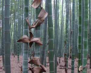bamboo carbon sequestration