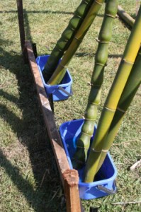 transpiration method bamboo