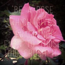 pink-flowers-tumblr-quotes-219