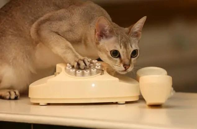 Oops! Cat Calls Cops  Life With Cats