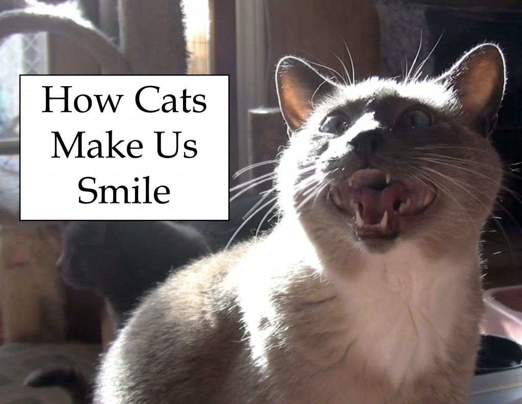 How Cats Make Us Smile  Life With Cats