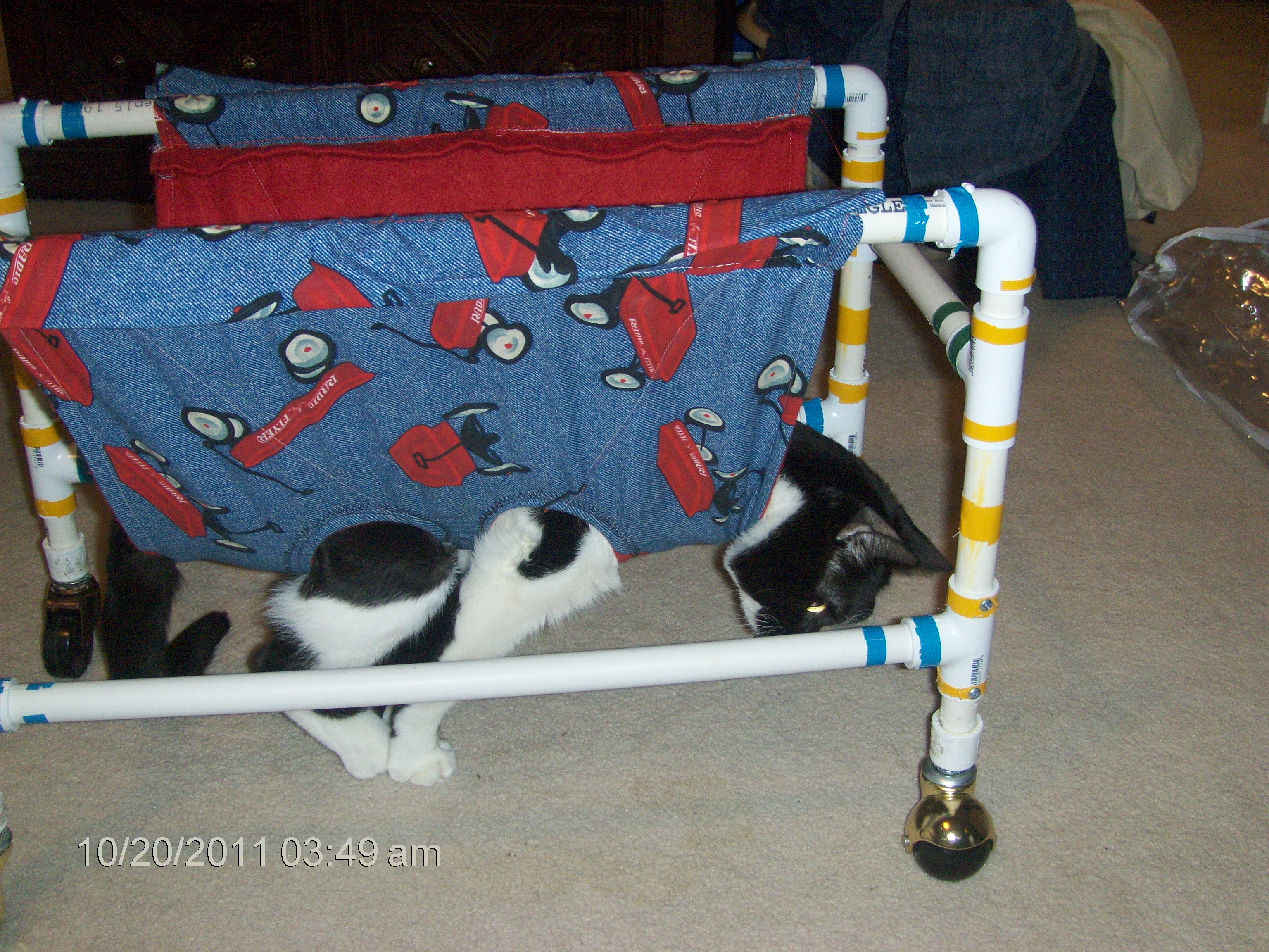 wheelchair for cats chair cover bows weddings what you need to know about walkers ch life with rita s