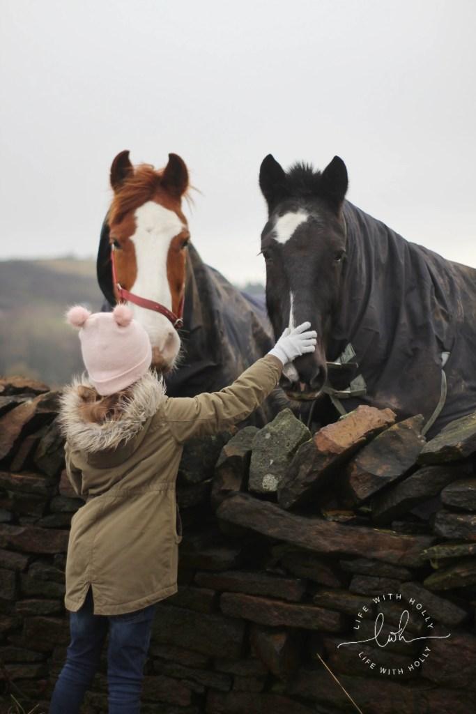 Chestnut Horse, Black Horse - Weekend-Wander-Round-Bradshaw, Slaithwaite Pole-Moor-Huddersfield-Life-with-Holly-Geocache