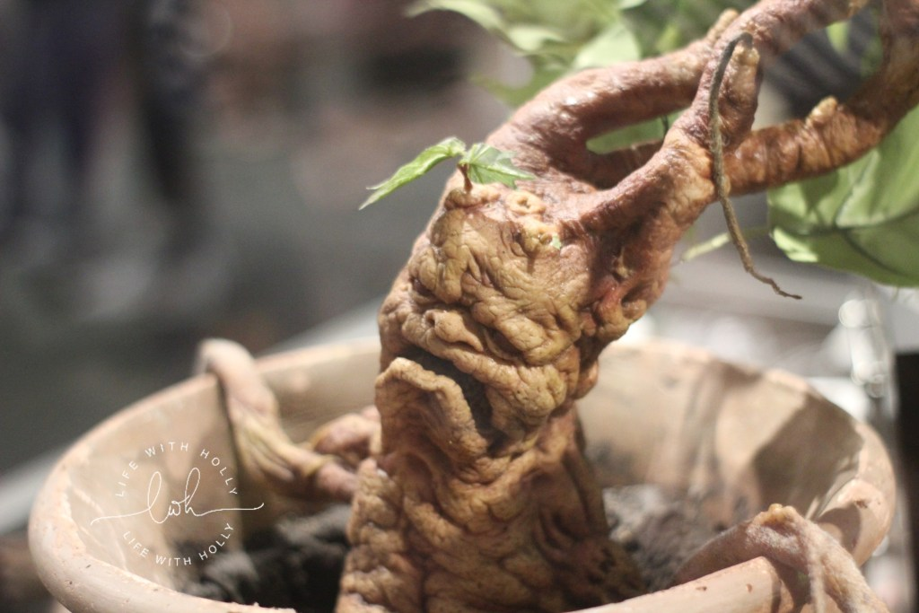 Mandrake Harry-Potter-Studios-Tours-Tips-and-Advice-for-Getting-the-Most-Out-of-Your-Trip-by-Life-with-Holly
