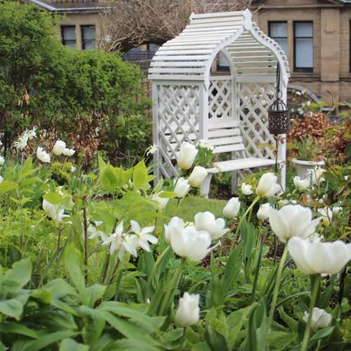 White tulips and daffodils and white arbour in a cottage garden setting - Life with Holly
