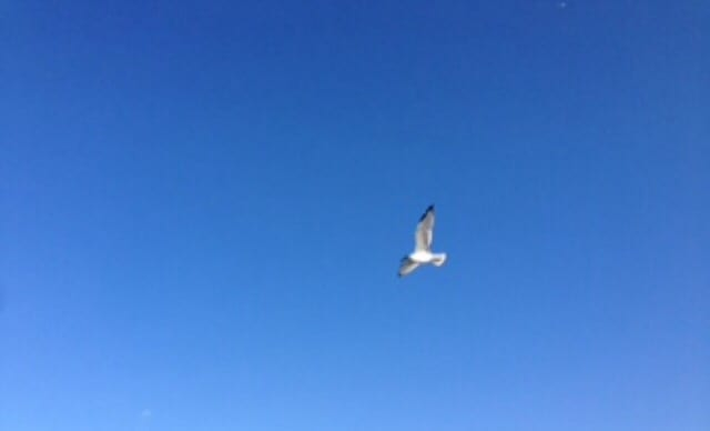 Bird with open wings gliding across a clear blue sky.