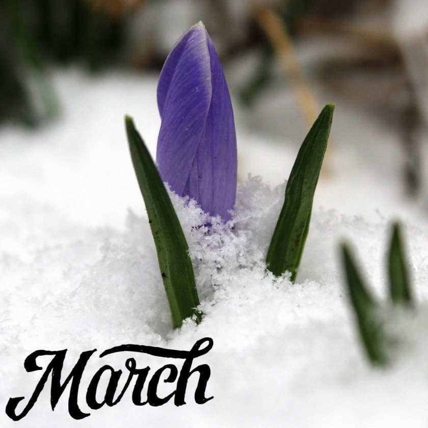 Purple crocus flower coming up through the white snow, and the word March in black in the bottom left hand corner