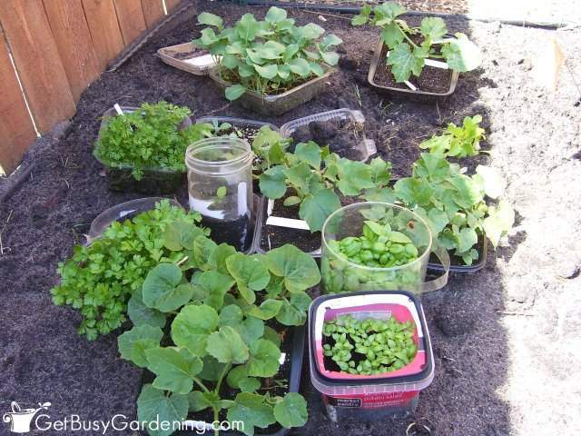 Winter Sowing – A Step By Step Guide - Get Busy Gardening! - HMLP 117 Feature
