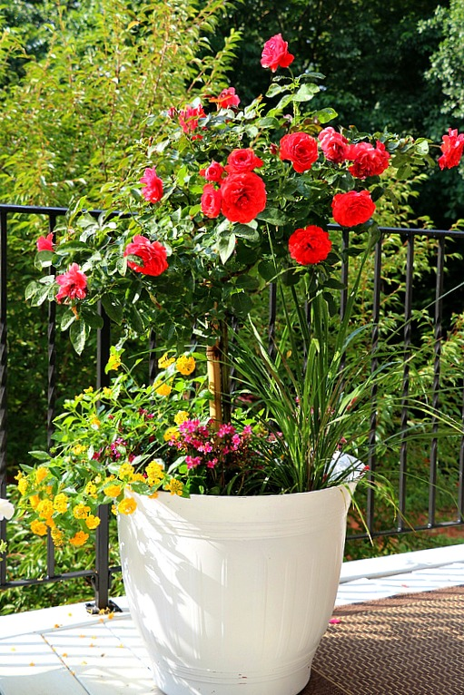 10 Beautiful Container Garden Ideas Life With Lorelai