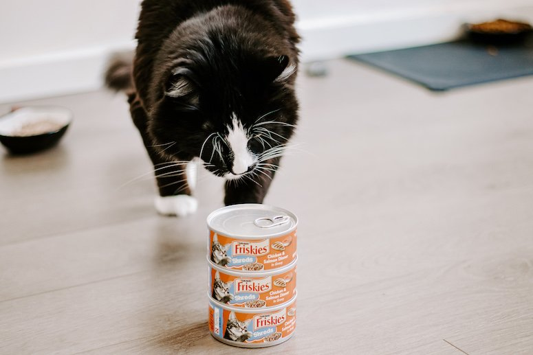 how we cat share: all about pet sharing for families1