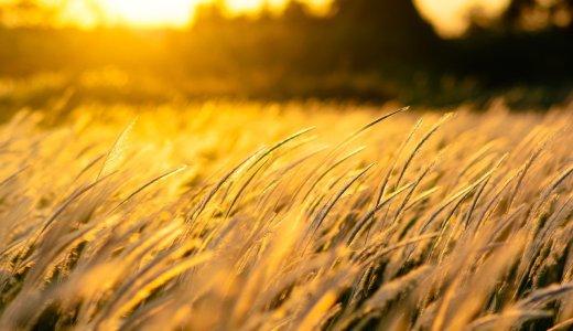 風の時代:チャクラの観点から風の時代に起こる変化について