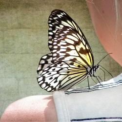 ATT01387 Happiness is like a butterfly…