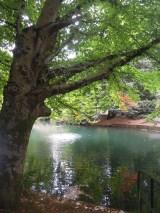 Fall hike at Laurelhurst Park