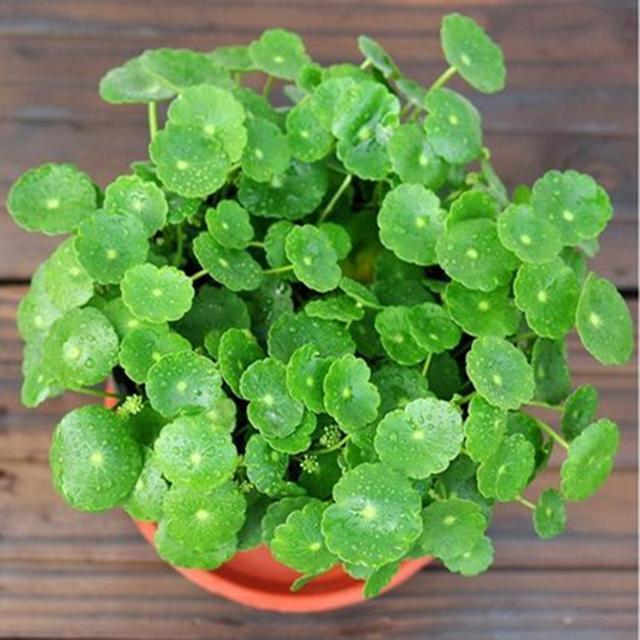 家裡這7種花一定要養!不僅可以淨化空氣,最重要是能旺財!! | LifeZ 生活誌